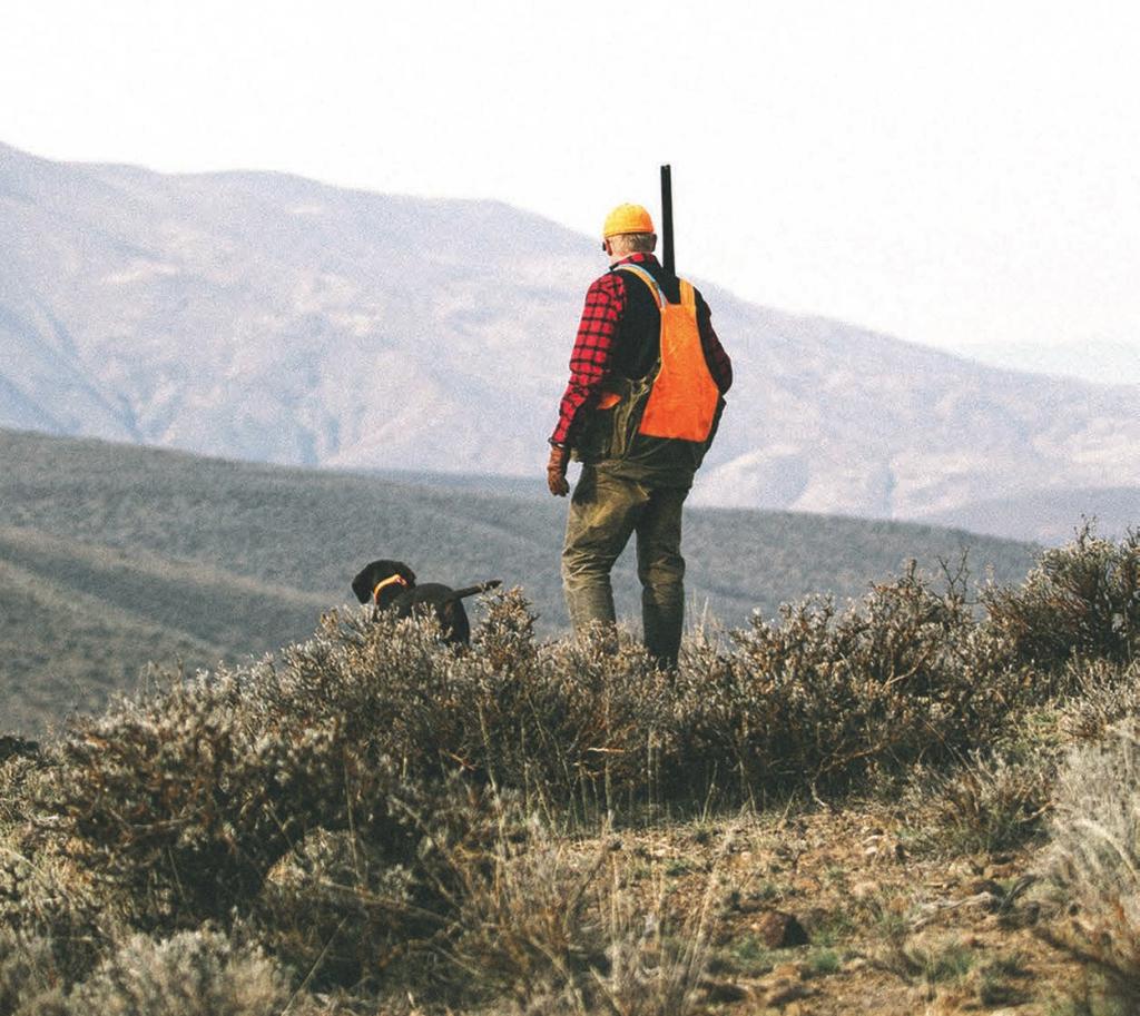 Man and Dog Surveying the Landscape Homeland
