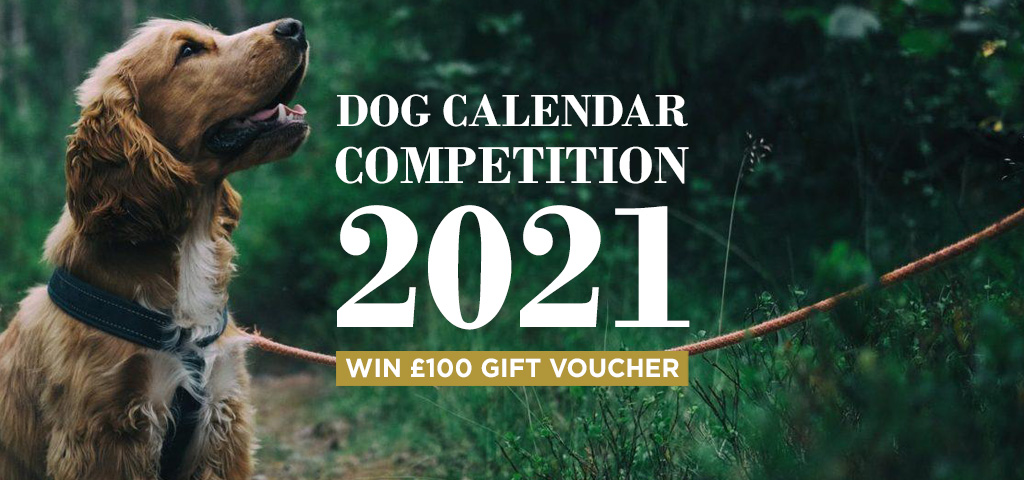 The Sporting Lodge Dog Calendar Competition 2021