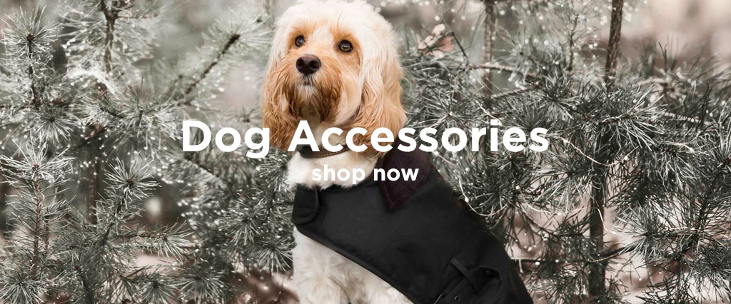 Dog Wearing Quilted Barbour Dog Coat. in Winter Scene.